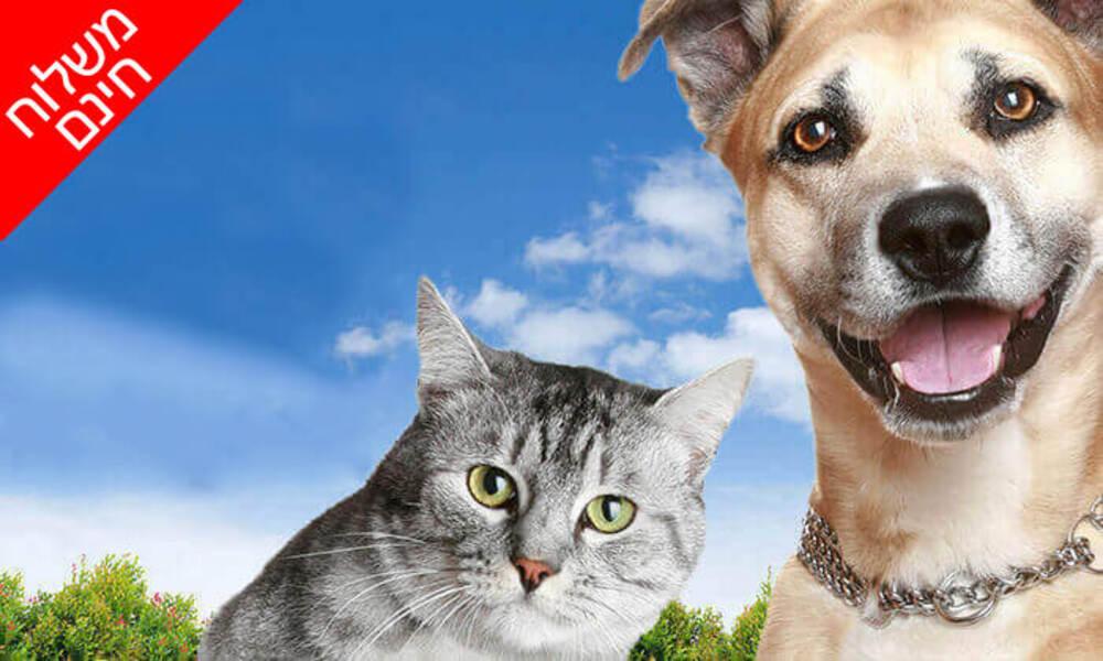 אמפולת פרונטליין פלוס לחתולים או לכלבים – משלוח חינם!